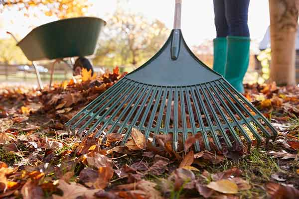 Fraser Valley Landscaping Raking Services